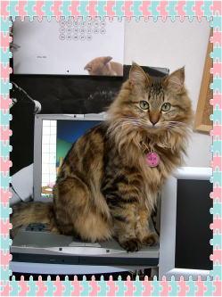 パソコンのキーボードの上にのる…だけでなく